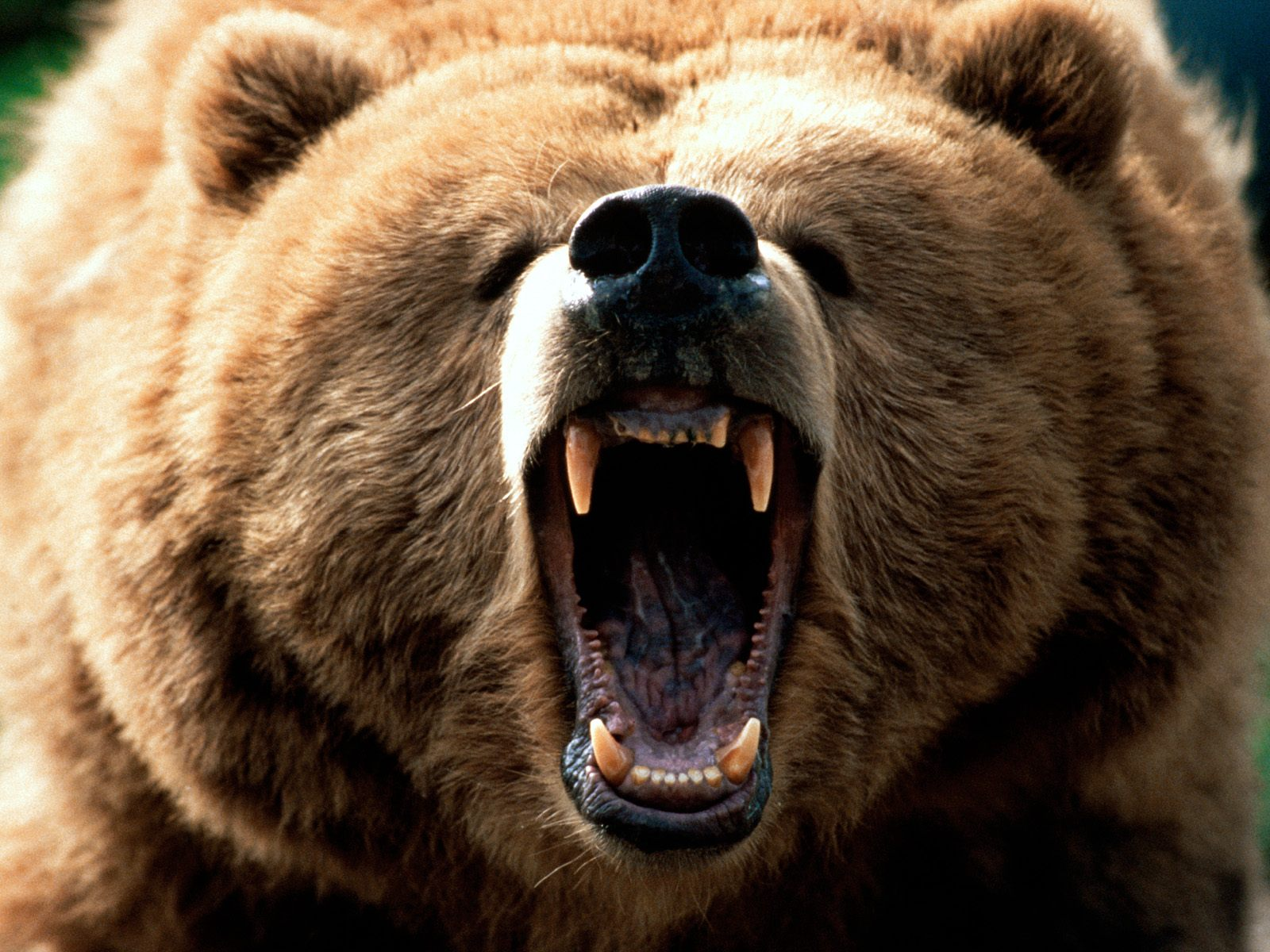feeling-grizzly-pictures.jpg'