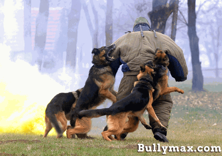 Personal Protection Dog Training Courses Uk