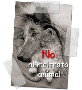 No al maltrato animal ni humano